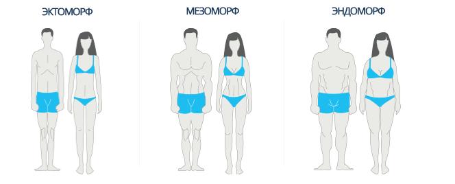 Соматотипы: виды телосложения, тренировка и питание