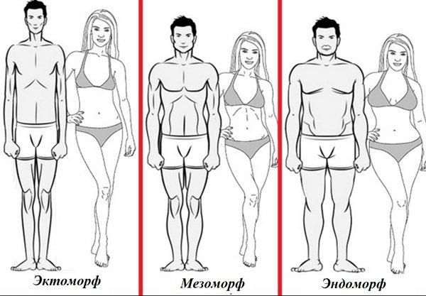 Мезоморф: внешние признаки, питание, тренировка
